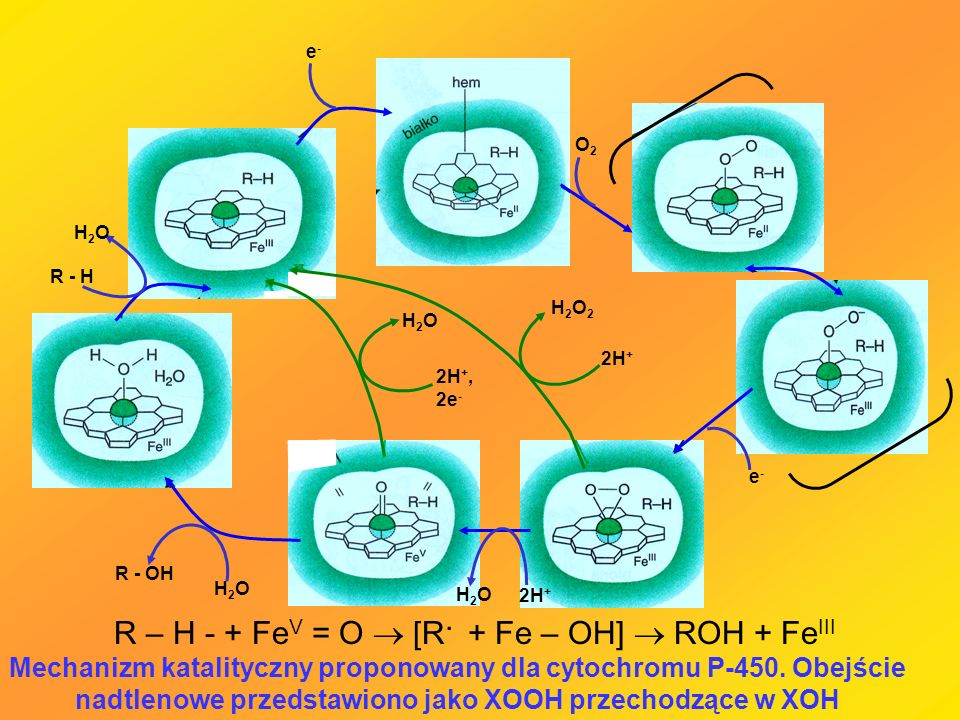 R – H - + FeV = O  [R. + Fe – OH]  ROH + FeIII